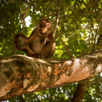 Auke Hamers - Moving Images Film en Fotografie - Sabang Monkey
