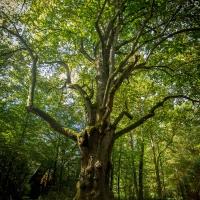 Auke Hamers - Moving Images Film en Fotografie - Lindeboom Sy